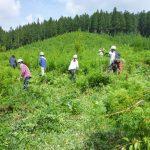 ビフォー。下刈りは横一列に並んで、ふもとから一斉に草を刈りながら頂上を目指し登っていきます