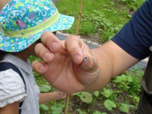 蝶やトンボなど、私たちの普段生活している地域ではなかなか見られない生き物を見つけました