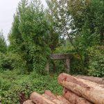 10年目を迎えた、かねやま絆の森の看板。記念樹の桜も大きくなりました。