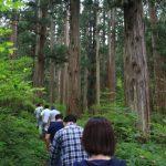 今日、植えた杉苗の未来の姿を若い参加者に見てもらいました