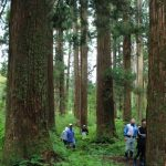 ここは江戸時代に植樹して300年、金山の人々が守り継いできた人工林です